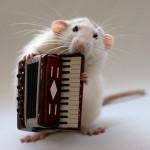 Мой блог, мой талисман - белая крыса с аккордионом
